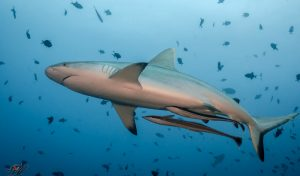 Sipadan diving season, dive sites, permits and accommodation