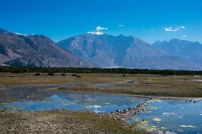 Valle de Nubra. que ver en Ladakh