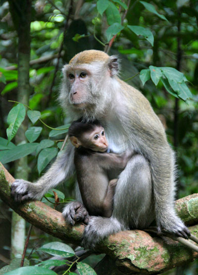 monkies bukit lawang best place to see orangutans in the wild
