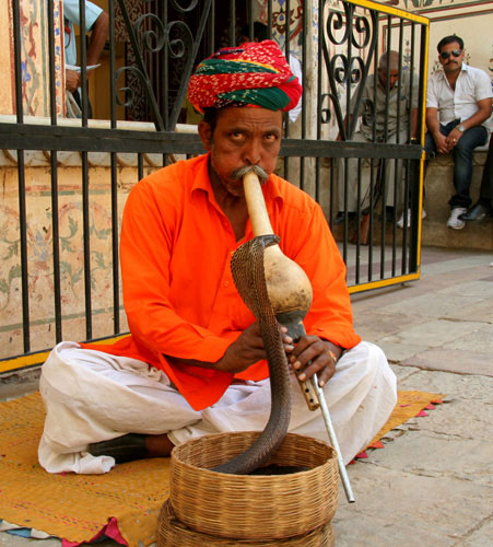Snake Jaipur india The 6 Best places to visit in Rajasthan