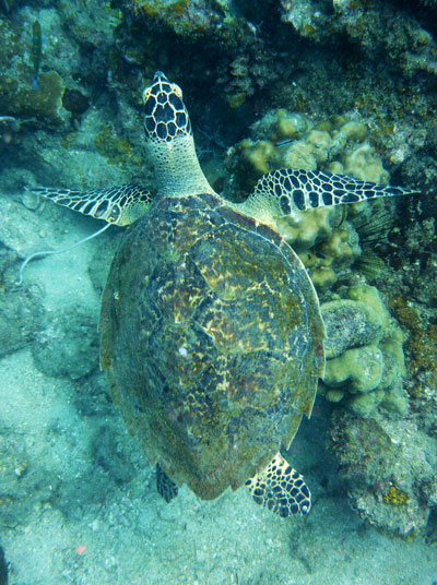 komodo turtle cool things to do in flores indonesia