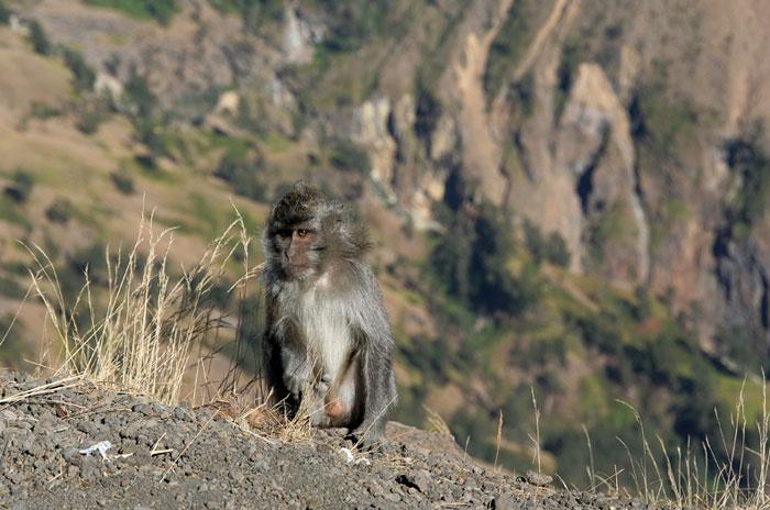 monos monte rinjani