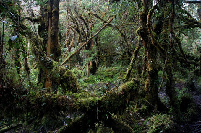 way kiroma rainforest Hiking the Baliem Valley on a budget