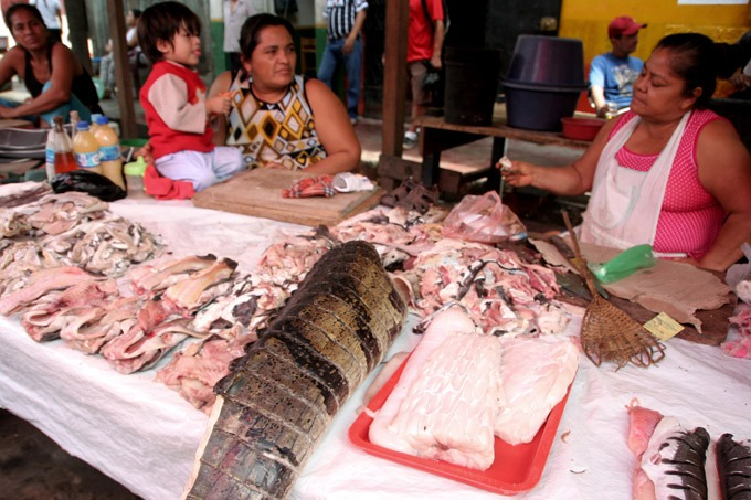 belen market Peruvian Amazon. How to get to Iquitos