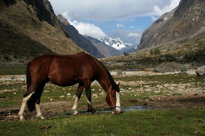 horses huaraz Santa Cruz trek on a budget