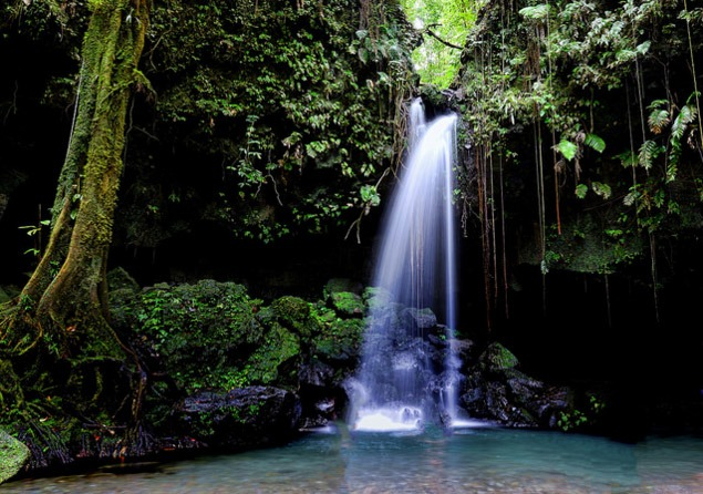 Emerald pool. Dominica. photo by Jiyi Ren. flickr
