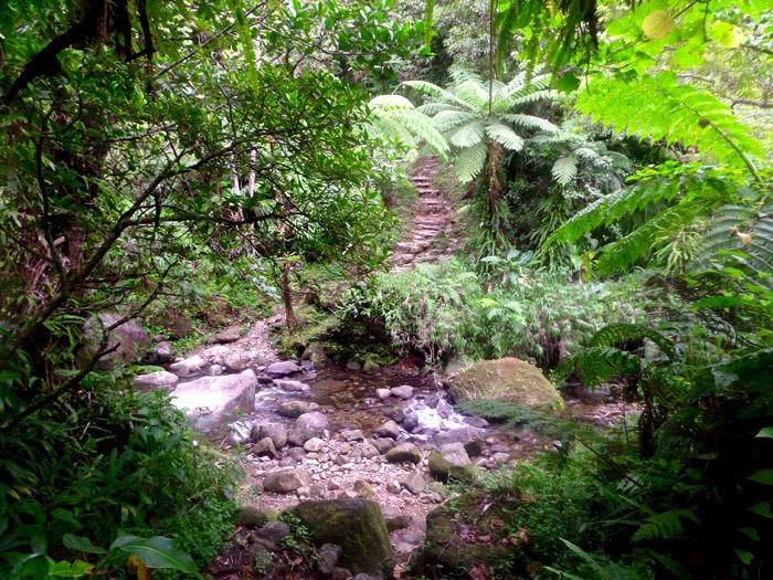 trekking al boiling lake en dominica selva bosque