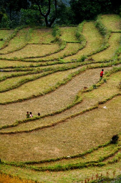trekking al campo base del annapurna terrazas arroz