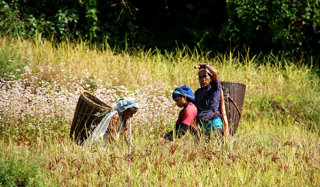 Las 8 mejores cosas que hacer en Pokhara, Nepal