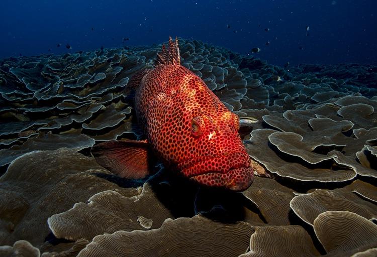 grouper best dive cameras